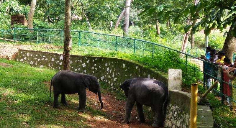 കോട്ടൂർ ആന പുനരധിവാസകേന്ദ്രം അന്തർദേശീയ നിലവാരത്തിൽ